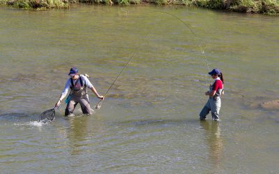 Trout Stocking Dates